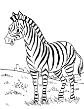 Zebra on step