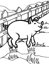 Farm pig image
