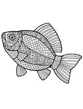 Sea fish to color