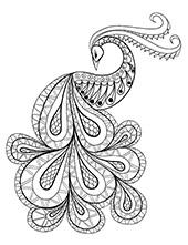 Peacock a bird