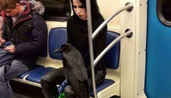 40 фото самых странных людей в метро • Страница 15 из 40 ...