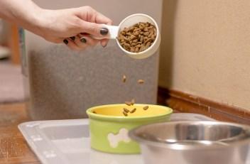 6.Kúpte na zimu zásobu granulí a vyžívové doplnky pre vášho psa