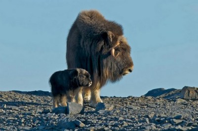 2. Pižmoň mama a dieťa