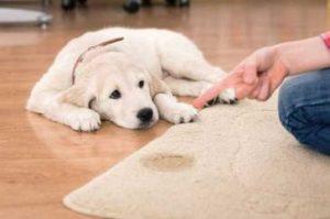 znečistenie domu  Zle správanie psa