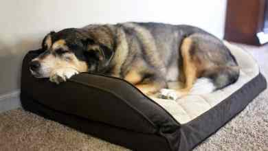 10 potravín a doplnkov, ktoré môžu psom pomôcť s bolestivou artrózov
