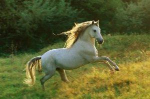 5. Andalúzsky kôň 10 najkrajších koní z celého sveta . Najkrajšie kone z celého sveta . Najkrajšie plemena koní s ktorými sa môžete stretnúť . 10 najkrajších koní