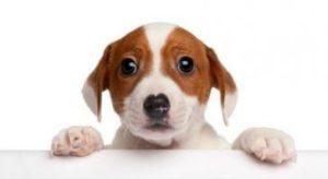 6. uzkosť Zle správanie psa