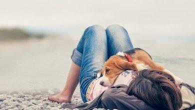 Správanie psa - 10 vecí, ktoré váš pes robí a čo znamenajú