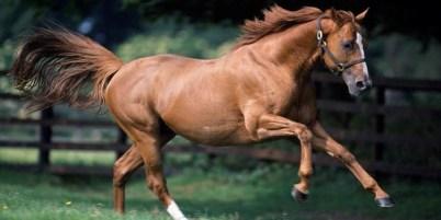 1.Anglický plnokrvník Najlepšie kone 10 najlepších plemien koní na svete . Najlepšie plemená koní na svete . Najlepšie kone zoznam plemien . Najlepšie plemena koní