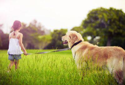 1.Zlatý retríver Pes k deťom