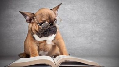 10 kníh ktoré by si mal prečítať každý milovník psov