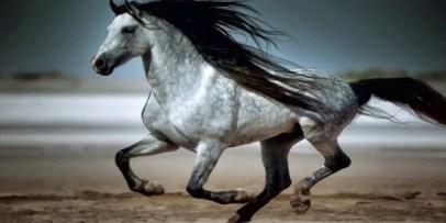 2.Andalúzsky kôň (Andalusian horse) Najlepšie kone 10 najlepších plemien koní na svete . Najlepšie plemená koní na svete . Najlepšie kone zoznam plemien . Najlepšie plemena koní