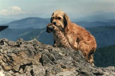 7.Hľadá sa Benji Filmy o psoch