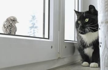 Aká je správna odpoveď pre majiteľov mačiek? Zdravotné problémy mačky