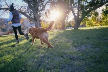 Narkolepsia Choroby ktoré môžu psy vyňuchať - 6 chorôb . Aké choroby môže pes vycítiť ? Choroby ktoré môžu psy vyňuchať 6 chorôb ktoré pes vycíti  a odhalí.