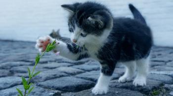 život mačky