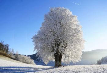 strom v zime Prečo zasadiť strom