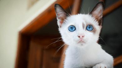 6 Najčastejších problémom so zdravím mačiek