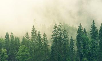 stromy čistia vzduch