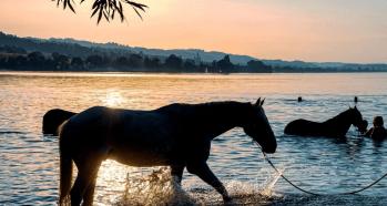 kupanie s konom Pohodlie koní - Čo treba vedieť o koňoch