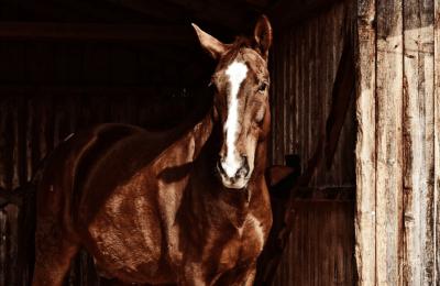 stajna pre kone Pohodlie koní - Čo treba vedieť o koňoch