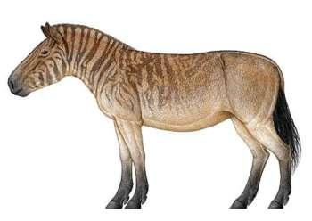 Hipparion Prehistorické kone praveke kone