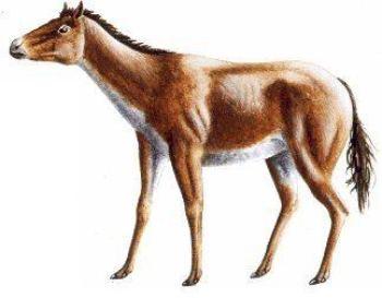 Parahippus Prehistorické kone praveke kone