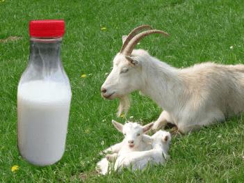 domace mlieko bio
