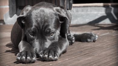 Dôležitosť psov v našom živote