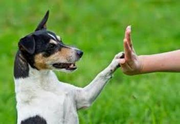 ako správne  trenovať psa 10 bežných chýb pri výcviku psa