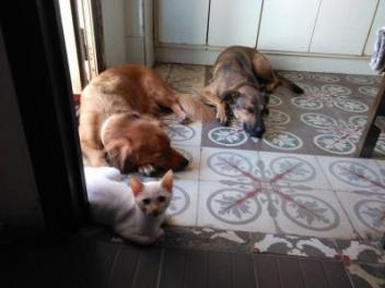 mačka a pes v interieri
