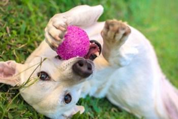 trening psa 1