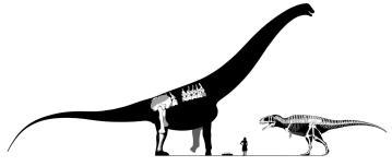 Argentinosaurus Najväčší dinosaury na svete : 15 najväčších dinosaurov