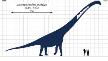 Sauroposeidon Najväčší dinosaury na svete : 15 najväčších dinosaurov