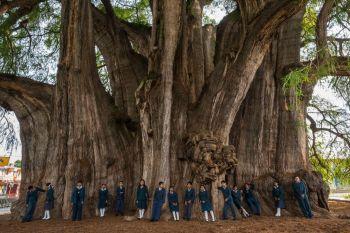 Fíkus V Lomteuheakale (Vanuatu, Tafea) Najväčší strom na svete najväčie a najstaršie stromi