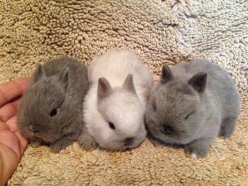 Sprievodca starostlivosťou o domáce králiky