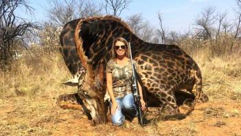 najvacsia ulovená žirafa 10 najväčších ulovených zvierat