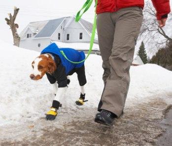 oblecenie a topanky pre psa Prechádzka so psom : 10 tipov pre zimu . Čo všetko treba vedieť pri prechádzke so psom v zime ? Prechádzka so psom  počas zimi môže byť trochu