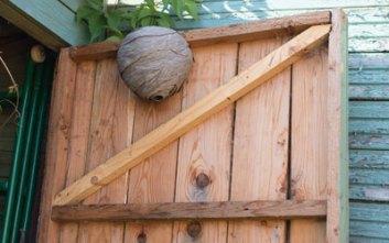 osie hniezdo Ako sa zbaviť osieho hniezda