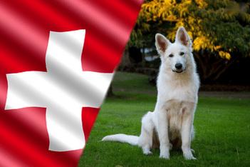 svajciarske plemena psov