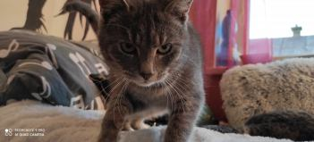 oči mačky Vek mačky v ľudských rokoch