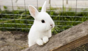 Plemená a dĺžka života zajacov