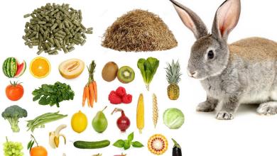 Čo môže jesť zajac a čomu sa radšej vyhnúť