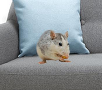 nteligentné domáce zvieratko