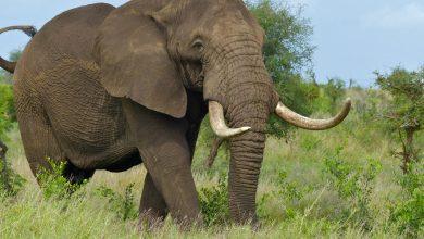 Slon najväčší najkrajší