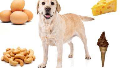 potraviny ktoré psy môžu a nemôžu jesť