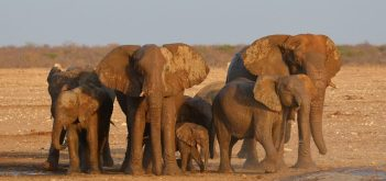 slonia koža Fakty o slonoch