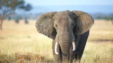 slony fakty o slonoch