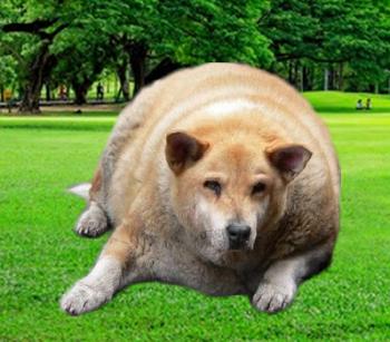 tučný pes