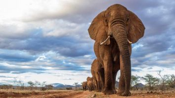 velky slon Fakty o slonoch